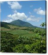 St. Kitts Fields Of Cane Canvas Print