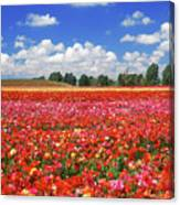Fields Of Flowers At Nir Banim Canvas Print