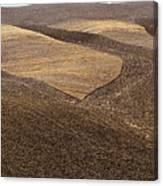 Fields Of Tuscany Canvas Print