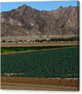 Fields Of Yuma Canvas Print