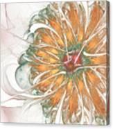 Fiery Chrysanthemum Canvas Print