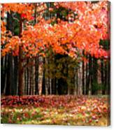 Fiery Leaves Canvas Print