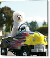 Fifi Goes For A Car Ride Canvas Print