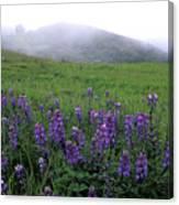 Figueroa Mountain With Fog Canvas Print