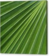 Fiji Fan Palm Canvas Print