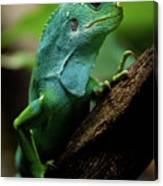 Fiji Iguana In Profile On Tree Branch Canvas Print