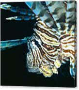 Fiji, Lionfish Canvas Print
