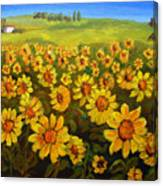Filed Of Sunflowers Canvas Print
