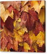 Final Fall In File Canvas Print