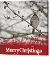 Finch Christmas Canvas Print