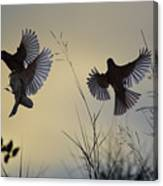 Finches Silhouette With Leaves 6 Canvas Print