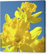 Fine Art Daffodils Floral Spring Flowers Art Prints Canvas Baslee Troutman Canvas Print