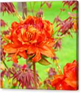 Fine Art Floral Art Prints Canvas Orange Rhodies Baslee Troutman Canvas Print