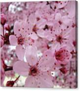 Fine Art Prints Spring Pink Blossoms Trees Canvas Baslee Troutman Canvas Print