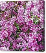 Fine Wine Cafe Apple Blossoms Canvas Print
