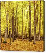 Fine Wine Cafe Golden Woods Canvas Print