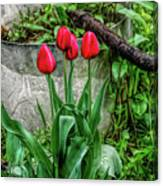 Fine Wine Cafe Red Tulips Canvas Print