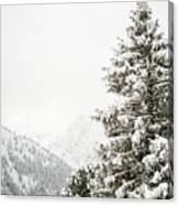 Fir Trees And Mountains Canvas Print