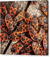 Fire Bugs Canvas Print