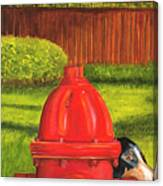 Fire Hydrant Dog Canvas Print