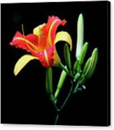 Fire Lily 2 Canvas Print