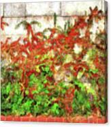 Fire Thorn - Pyracantha Canvas Print