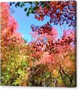 Fire Top Trees Canvas Print
