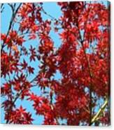 Fire Tree II Canvas Print