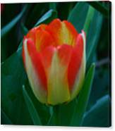 Fire Tulip Canvas Print
