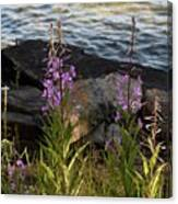 Fire Weed Looking At Lake Superior Canvas Print
