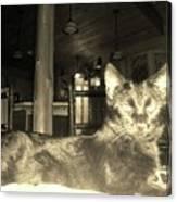 Firece Cat Canvas Print