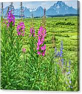 Fireweed In The Foreground Canvas Print