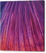 Fireworks II Canvas Print