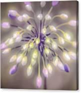 Fireworks  Wildflowers Canvas Print