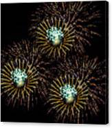 Fireworks - Yellow Spirals Canvas Print
