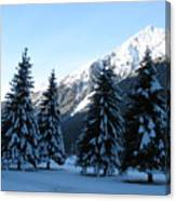 Firs In The Snow Canvas Print