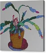 First Bloom Christmas Cactus Canvas Print