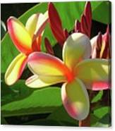 First Bloom Canvas Print