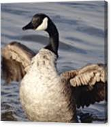 First Day Of Spring Goose Canvas Print