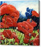 First Of Poppies Canvas Print
