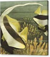 Fish 8 Canvas Print