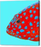 Fish Art - Strawberry Grouper Canvas Print