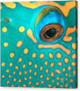 Fish Eye Canvas Print