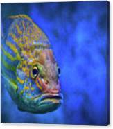 Fish Frown Story Canvas Print