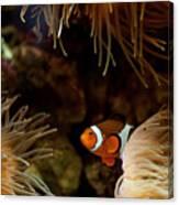 Fish In Sea Anemones Aquarium Canvas Print