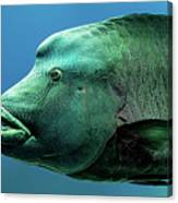 Fish Lips Canvas Print