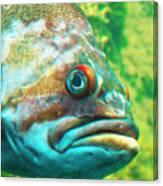 Fish Looking At You Canvas Print