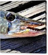 Fish Mouth Canvas Print