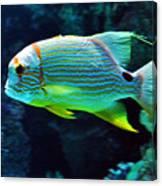 Fish No.3 Canvas Print