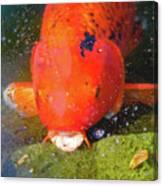 Fish Surprise Canvas Print